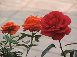 flowers-1436890-m